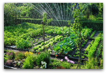 Vegetable Garden Irrigation How Much And How Often E